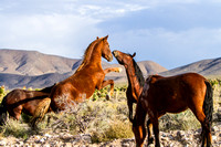 Wild Horse Photography by James Marvin Phelps