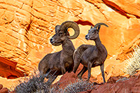 Red Rock Guardians